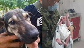 Dog rescues an abandoned baby in a landfill by going to help
