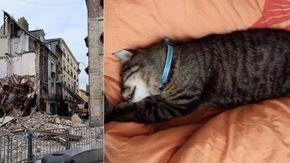 Il miracolo di Marius: dopo essere rimasto bloccato per 11 giorni, un gatto viene salvato da un edificio che rischia di crollare