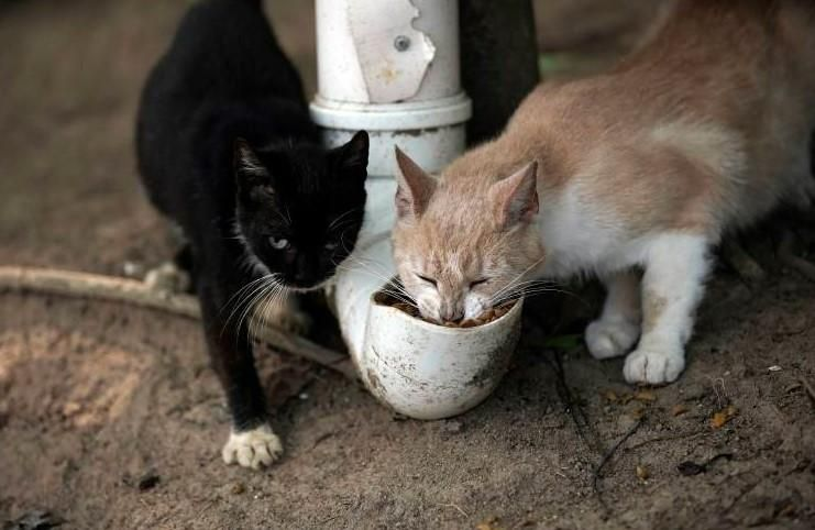 The coronavirus nightmare hits the Isle of Cats: the pandemic leaves the cats without food, here's how they are saving them