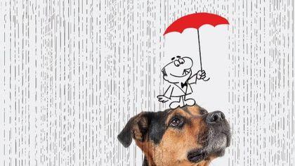 Gli animali si mettono in posa a Milano per il calendario di beneficenza
