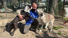 Tabla y Clyde, que fueron rescatados por la policía de Trastevere de los abusos, ahora buscan un hogar juntos