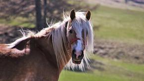 Il mistero dei cavalli mutilati o morti in Francia viene svelato (in parte)