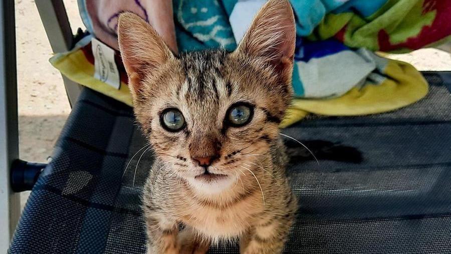 """Coppia in vacanza in Grecia incontra un gatto randagio: """"Così Vangelis ci ha scelti come sua nuova famiglia"""""""