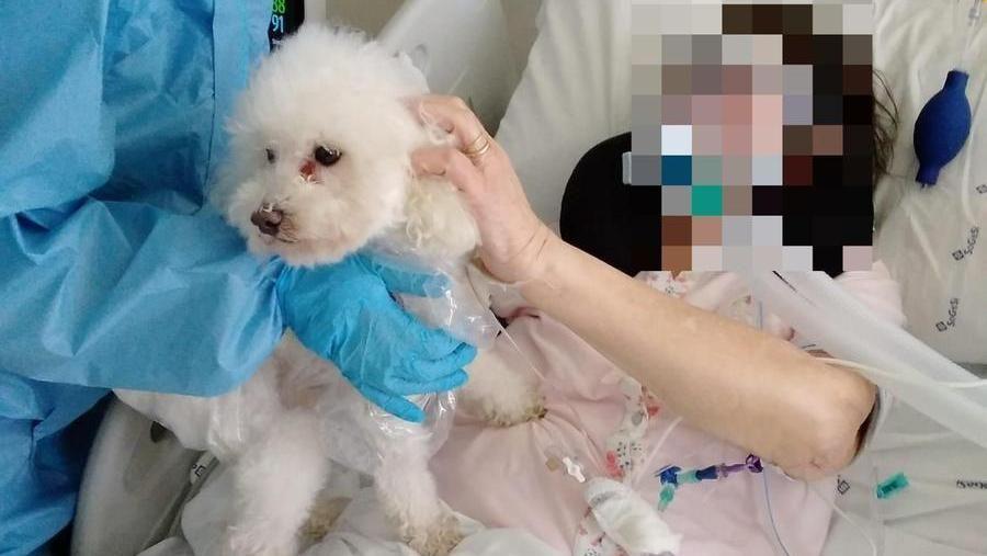 """Covid, anziana 80enne intubata nel reparto """"bolla"""" può rivedere il suo adorato cane Whiskey"""