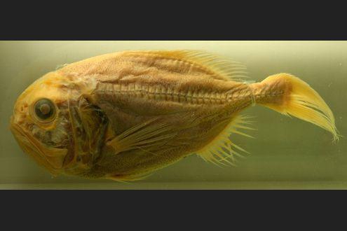 datazione acquario femmina