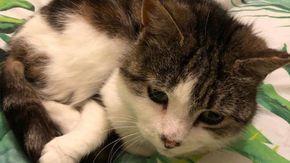 La storia di Jess, il gatto abbandonato che ha ispirato l'impresa ciclistica di uno studente