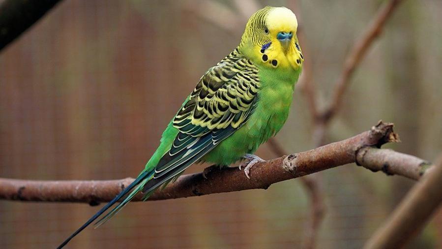 Spara a un pappagallo della vicina nel proprio giardino, denunciato un 75enne per  maltrattamento sugli animali