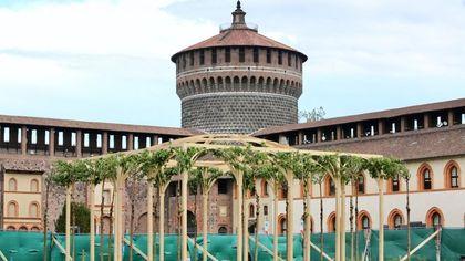 Milano, al Castello Sforzesco cresce il gelso sul pergolato di Leonardo