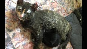 La storia di Minka, la mamma gatto che si è lanciata fra le fiamme di un incendio per salvare i suoi cuccioli