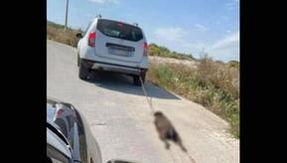 Nel Siracusano un cane legato e trascinato da un'auto in corsa, muore per le ferite. Fermato un uomo