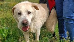 Peppino, after 13 years in the kennel has lost sensitivity to a paw: who can help him?