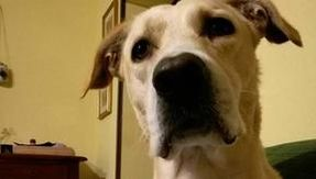 Five convicted of killing Rocky, a pet therapy dog.