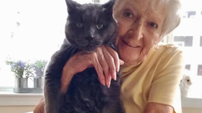La bella storia di Raven, un gatto di 14 anni che è finito in un rifugio andando a portare gioia in una casa per anziani