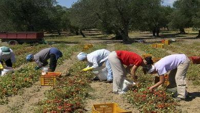 Sicilia, sulle schiave romene<br /> si muove il Parlamento