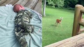 Il neonato piange, la femmina di cervo esce dal bosco per consolarlo