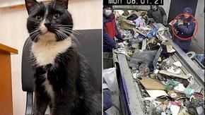 Il gatto salvato dalla spazzatura ora può dormire sonni tranquilli sotto la presidenza di un ministro russo e lo è stato