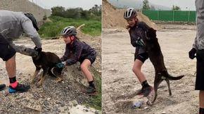 Così un cane ringrazia i ciclisti che gli hanno liberato la testa incastrata in una bottiglia di plastica