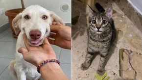 Hola e Micia sono state adottate, la nuova vita delle inseparabili cucciole di cane e gatto riparte da Lecco