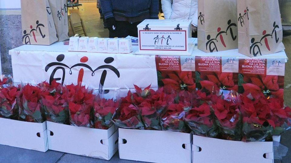 Prezzo Stella Di Natale Ail.Le Stelle Di Natale Per Aiutare L Ail Contro Le Leucemie La Stampa