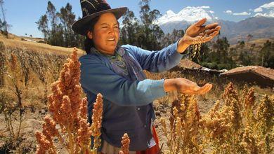 L'otto per mille allo Stato diventa quinoa
