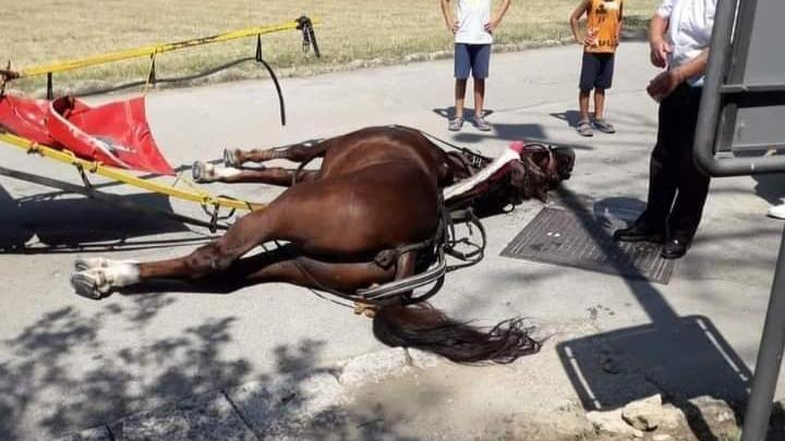 Cavallo che trasporta i turisti nella villa di Caserta stramazza e muore sotto il sole cocente