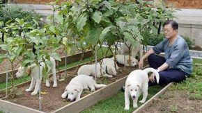 """Sud Corea, il presidente Moon apre al divieto di consumare di carne di cane: """"Non è ora di smettere?"""""""