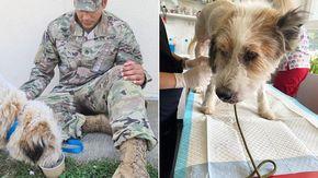 Avvelenano due cani in una base militare: il sergente fa di tutto per salvare l'unico sopravvissuto