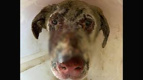 Quegli occhi del cane Angelo che si sono spenti senza avere una spiegazione