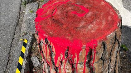 """Ischia, performance di protesta: dipinti di """"rosso sangue"""" i pini abbattuti"""