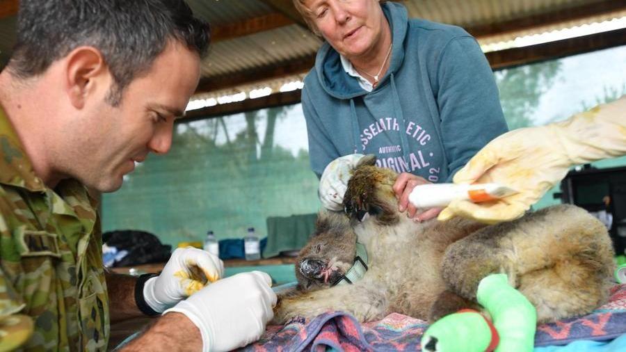 Animali rari a rischio e natura depredata: l'Australia distrugge il suo grande tesoro – La Stampa