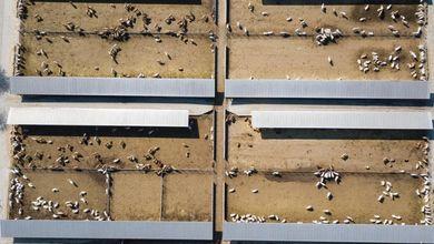 Agricoltura e allevamenti non sono sostenibili: ogni anno