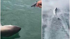 Sparano a uno squalo e lo trascinano in barca fino alla morte, finiscono in cella due uomini