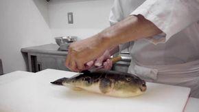 A Tokyo dove si rischia la vita con il pesce palla: viene preparato così o si muore
