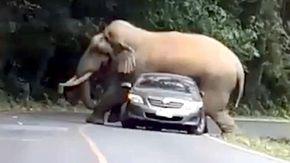 """La rivincita dell'elefante sui turisti, non gradisce """"l'invasione"""" e se la prende con l'auto"""