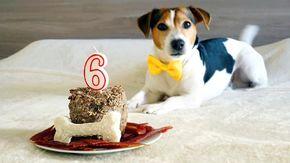 Per calcolare l'età di un cane non si moltiplica per 7, ecco come fare secondo gli scienziati