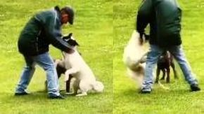 La brutalità del padrone contro il suo cane, lo strattona e prende a pugni sul muso