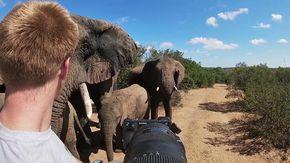 """Viene caricato da un branco di elefanti spuntati dal nulla ma viene """"graziato"""": """"Non so perché l'hanno fatto"""""""