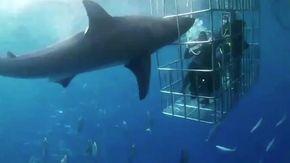Terrore nella gabbia per i sub, lo squalo bianco attacca: ma il finale è tristemente a sorpresa