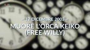 """Oggi quel giorno, """"Muore l'orca Free Willy"""" (12 dicembre 2003)"""