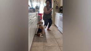 Florida, il cane balla il reggaeton in cucina: la coreografia è perfetta