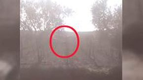 Il mistero della pantera nera nelle campagne del Foggiano: i contadini filmano un animale tra gli alberi