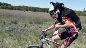 Cane abbandonato e disidratato viene salvato da un ciclista