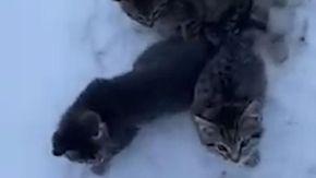 Trova tre gattini congelati nella neve e li salva con del caffè caldo