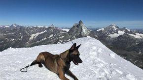 L'avventura di Malice tra i ghiacciai: il cane da valanga che è sopravvissuto all'inverno della Valle d'Aosta
