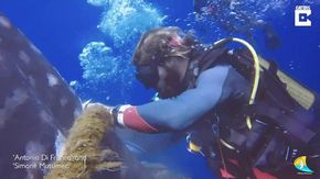 Maldive, il salvataggio dello squalo balena: i sub lo liberano dalla rete e lui ringrazia così