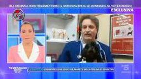 """Coronavirus e cani, il veterinario: """"Non usate la candeggina per disinfettare le zampe"""""""