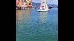 Un'aguglia imperiale a Portofino