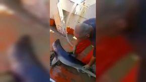 Manfredonia, lo squalo finisce nella rete: i pescatori lo rilasciano in mare
