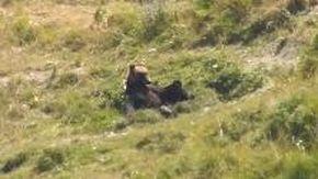 Avvistato il primo orso nel parco del Gran Sasso