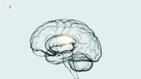 Essere smemorati è segno di grande intelligenza: la scoperta dell'Università di Toronto